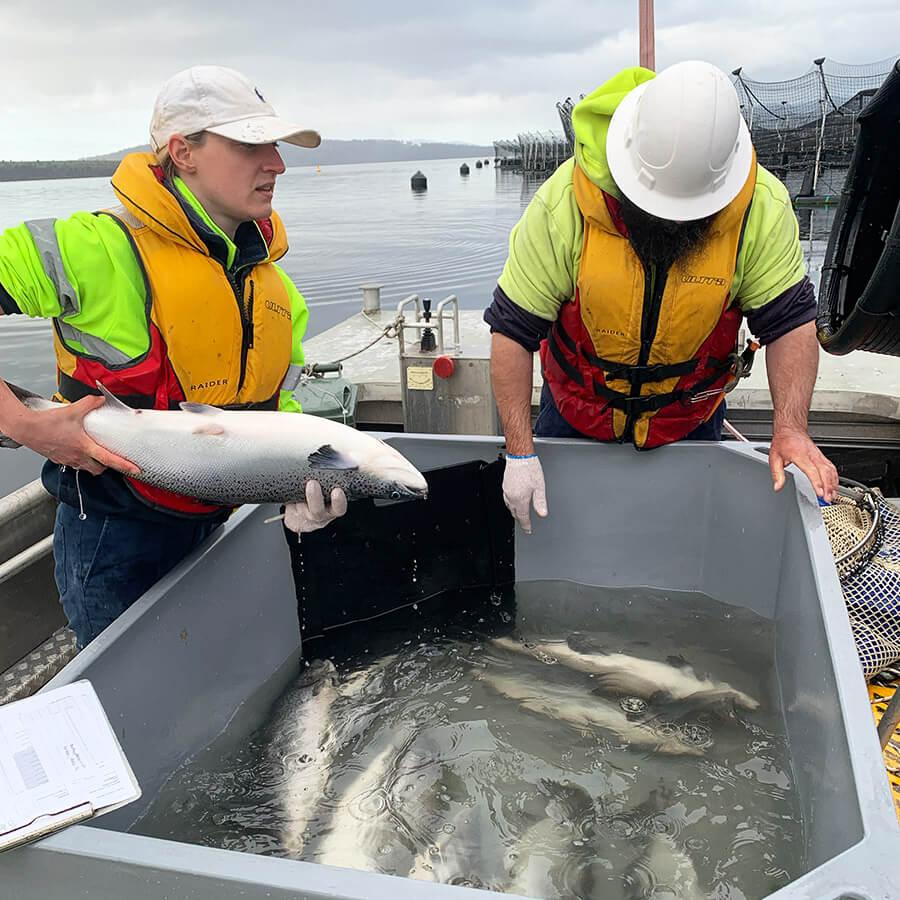 aquaculture-seafood-apprenticeship-hobart-tasmania-australia-maritime-training-seafood-5