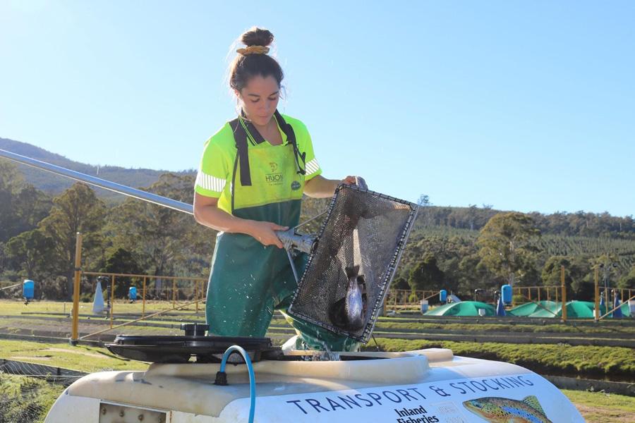 certifitcate-traineeship-aquaculture-seafood-maritine-training-2