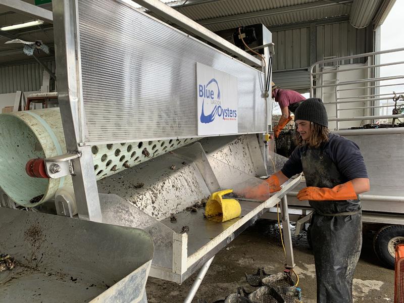 certifitcate-traineeship-aquaculture-seafood-maritine-training-3