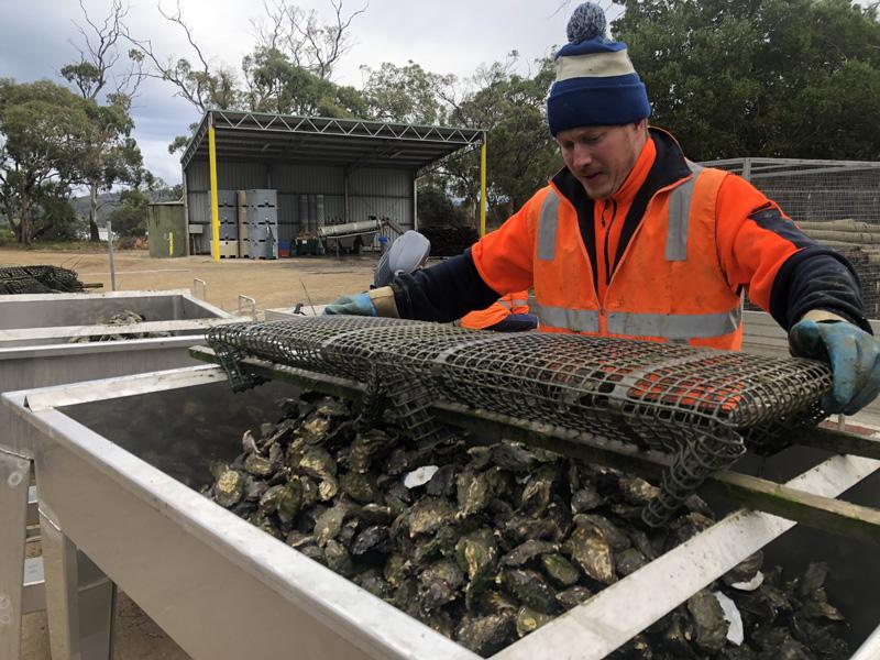 certifitcate-traineeship-aquaculture-seafood-maritine-training-4