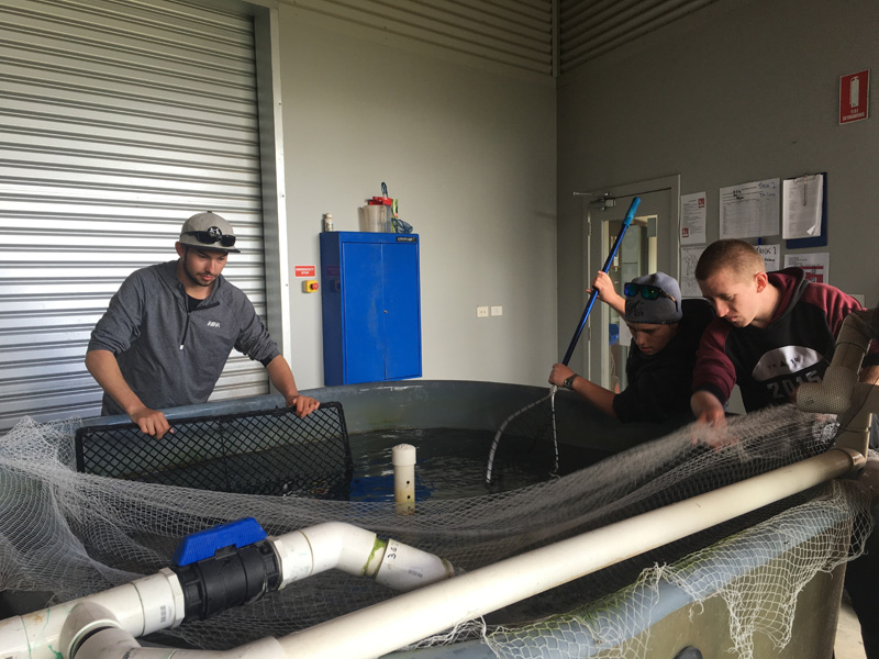 certifitcate-traineeship-aquaculture-seafood-maritine-training-5