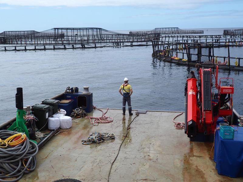 marine-engine-driver-2-med2-seafood-maritime-marine-training-australia-hobart